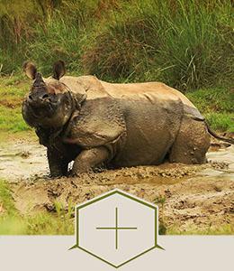 Parc national de Chtiwan - Voyage Népal
