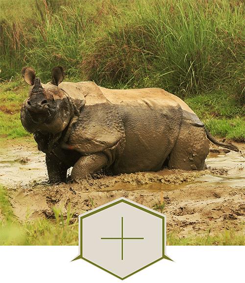 parc national de Chitwan - Népal voyage