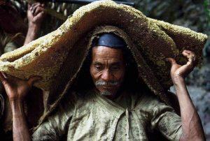 Chasseurs de miel au Népal