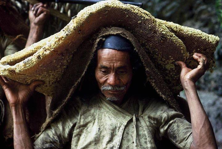Gurung, chasseur de miel