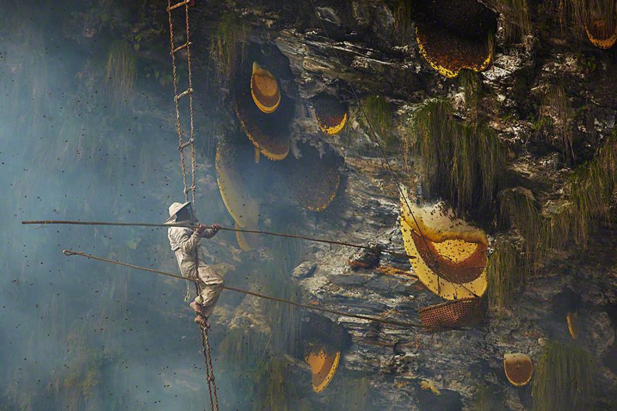 chasseur de miel au Népal