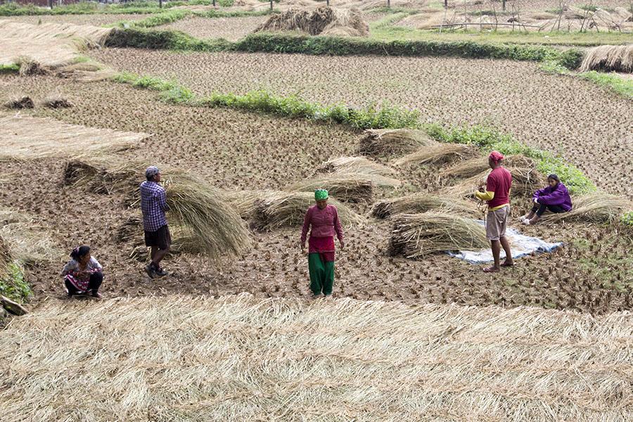 agriculteur à Damside Pokhara
